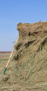 Haybale with fork